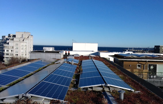 Solcellsanläggningen är placerad på stativ på fastigheternas platta tak.