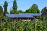 Solcellsstöd sänks – men potten ökar